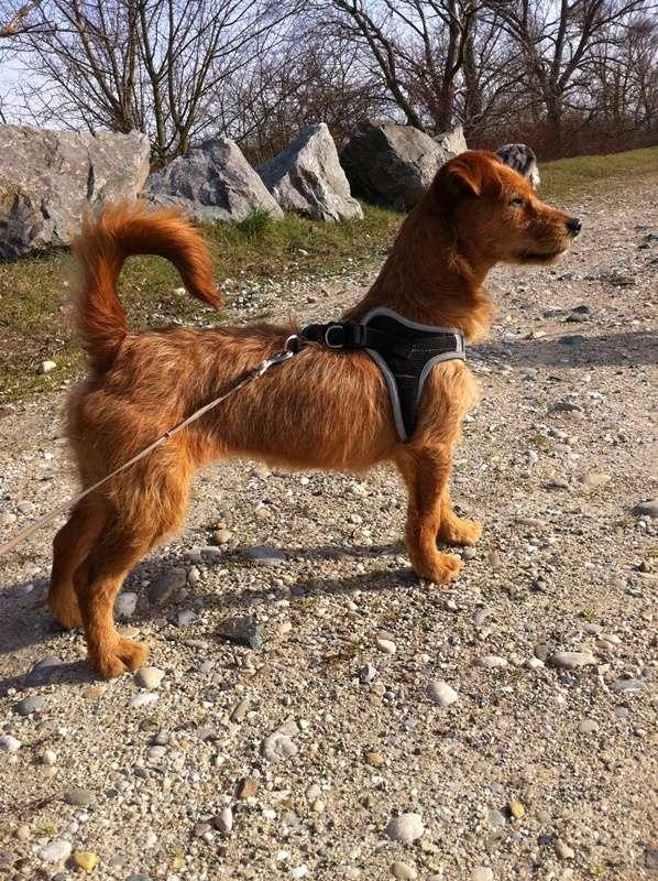 Ardilla petite croisée  à l'adoption Scooby France Adoptée  Photo_11