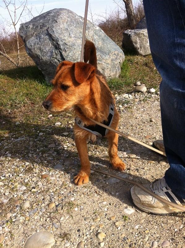 Ardilla petite croisée  à l'adoption Scooby France Adoptée  Photo_12