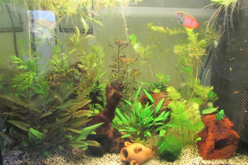 L'aquarium de Protector - Page 3 Img_0810