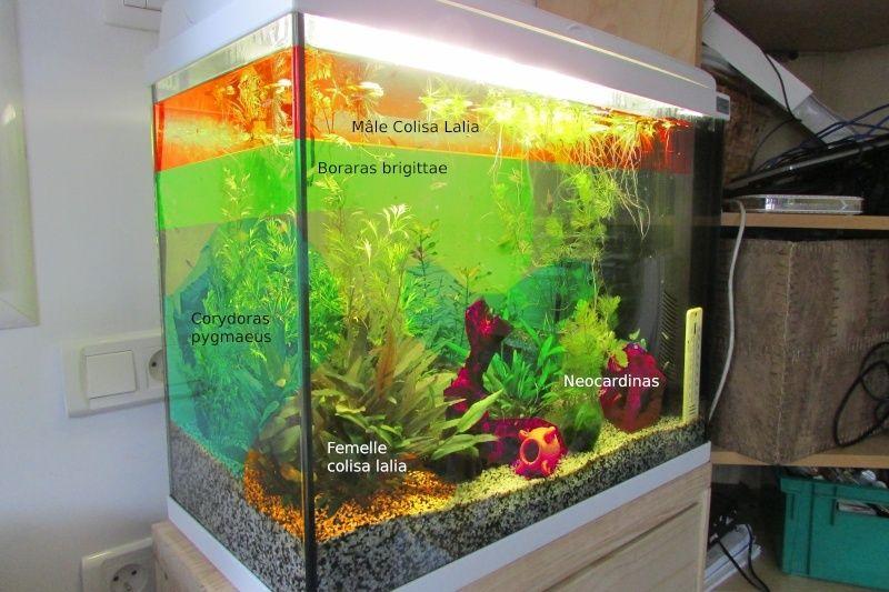 L'aquarium de Protector - Page 3 Repart10