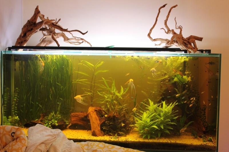 [résolu]Un grand bac et des petits poissons : taeniacara candidis - Page 4 Img_9110