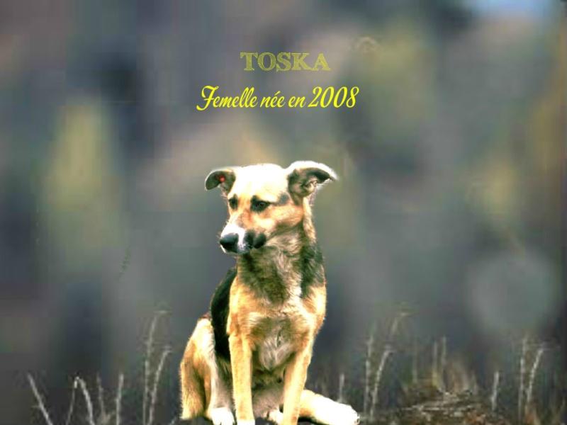 TOSKA NEE LE 11/09/2008 -EN FA DANS LE 49 -  Parrainée par Zoé 94 - NE PLUS DIFFUSER Toska10