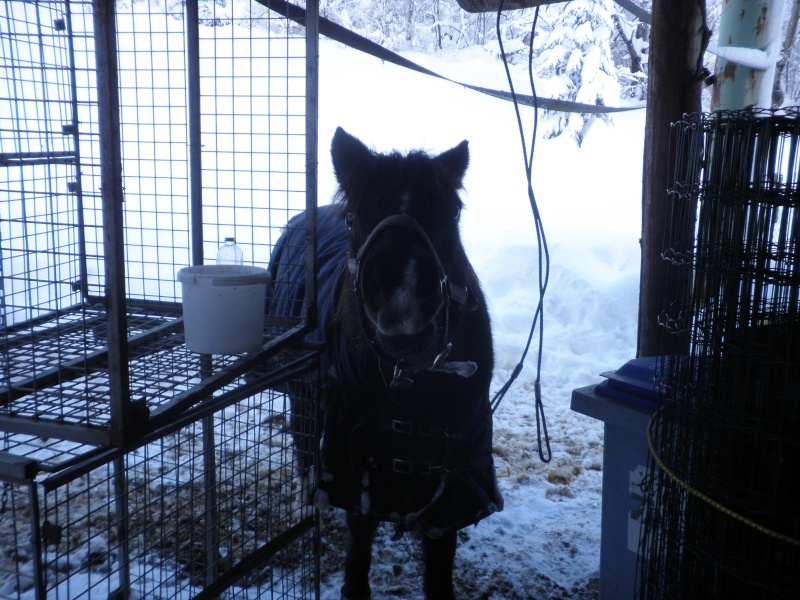 HAVANE - OI poney  née en 1995 - adoptée en mars 2014 par dona carlota P2020010