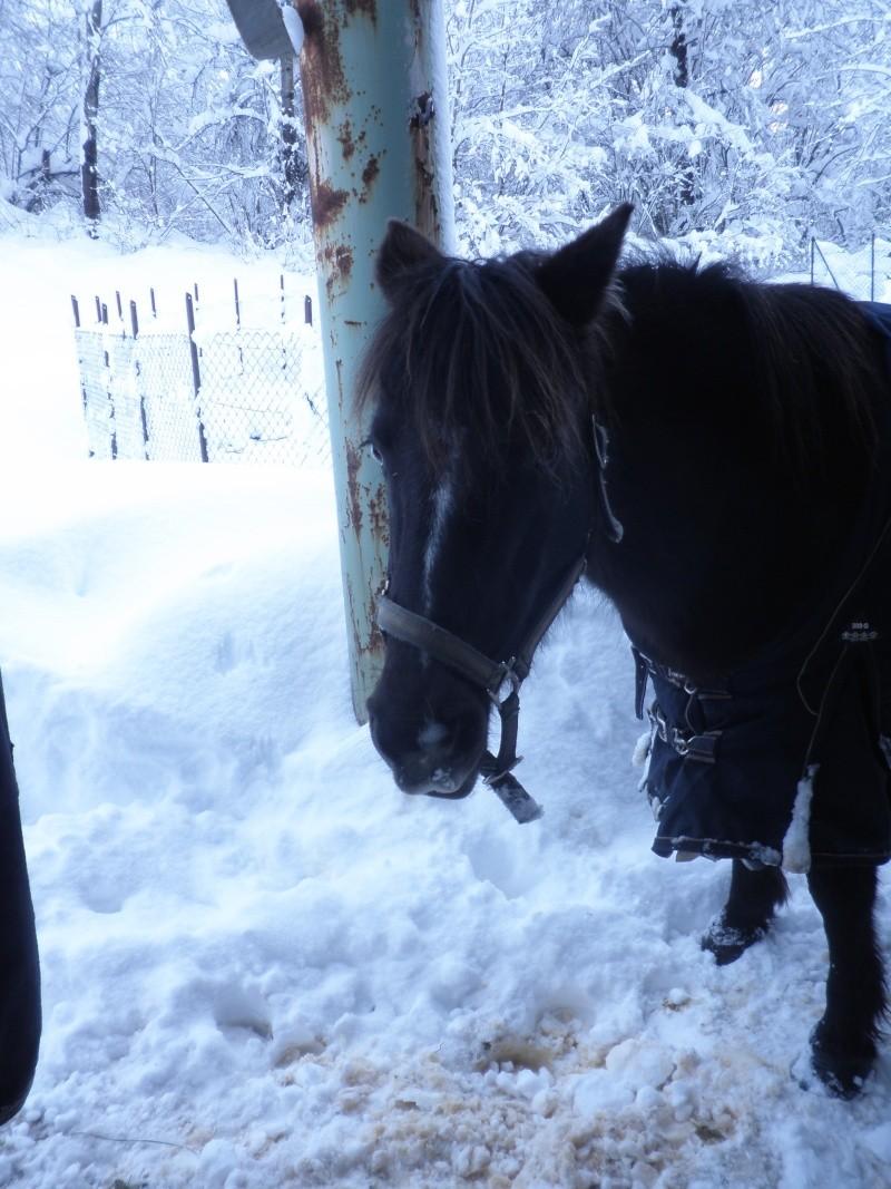 HAVANE - OI poney  née en 1995 - adoptée en mars 2014 par dona carlota P2020012