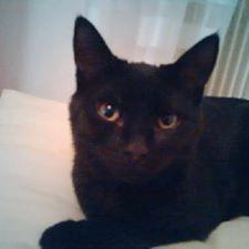 Jezzy, mâle, 28.08.201, noir Jezzi10