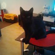 Jezzy, mâle, 28.08.201, noir Jezzi110