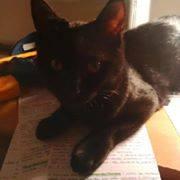 Jezzy, mâle, 28.08.201, noir Jezzi210