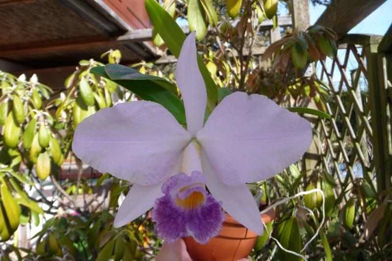 Münchner Orchideenausstellung! P1300012