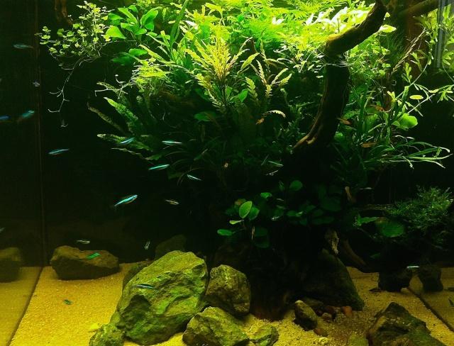 Présentation de mes aquariums - Page 6 20010