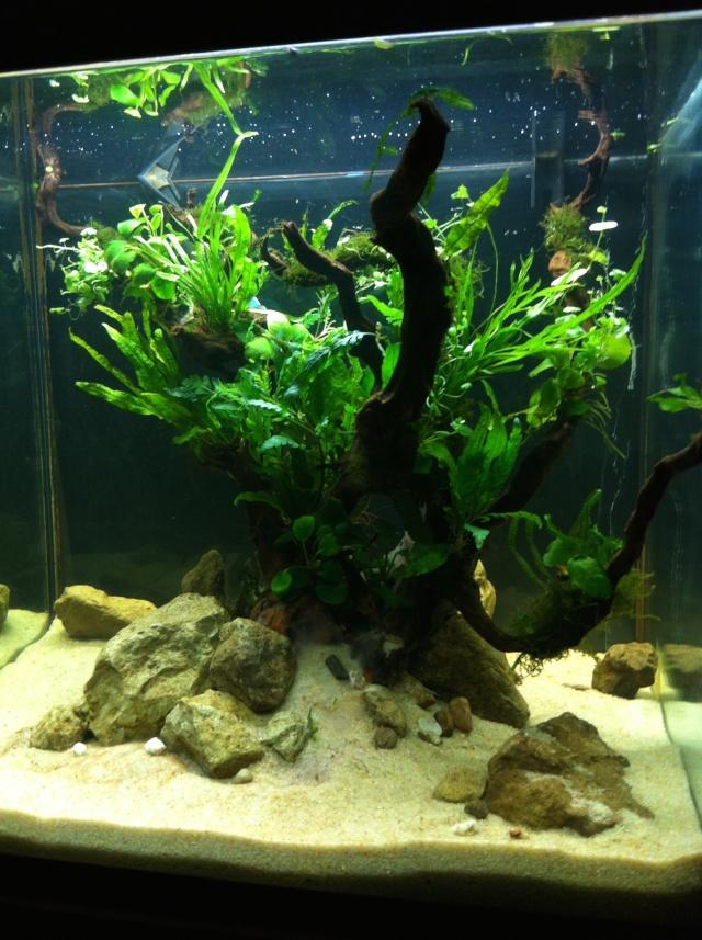 Présentation de mes aquariums - Page 6 Fa31110