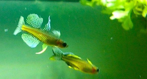 Présentation de mes aquariums - Page 10 Gertru10