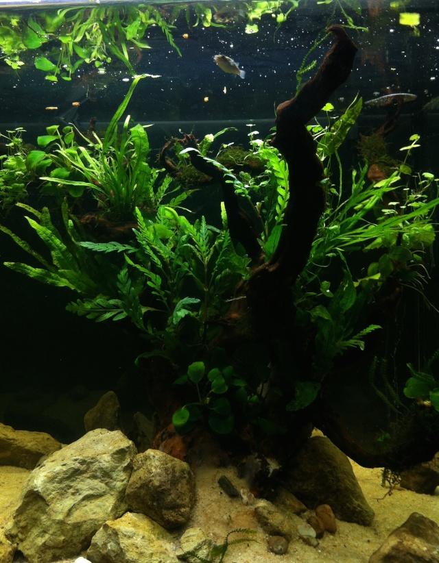 Présentation de mes aquariums - Page 6 Img_7710