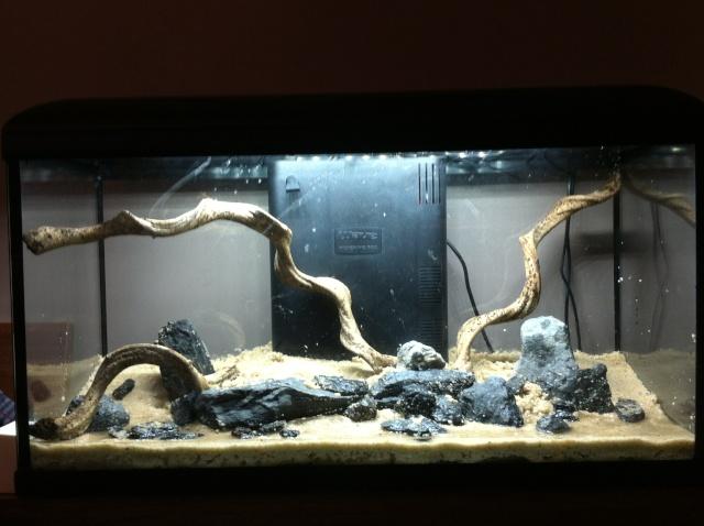 Présentation de mes aquariums - Page 3 Img_8413