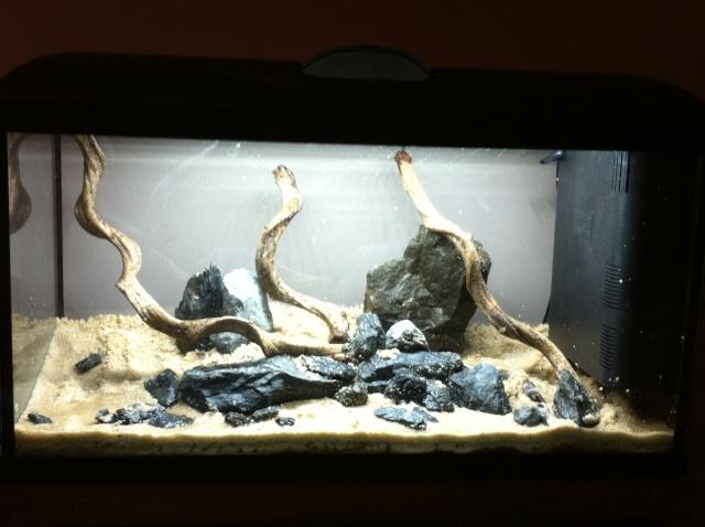 Présentation de mes aquariums - Page 3 Img_8416