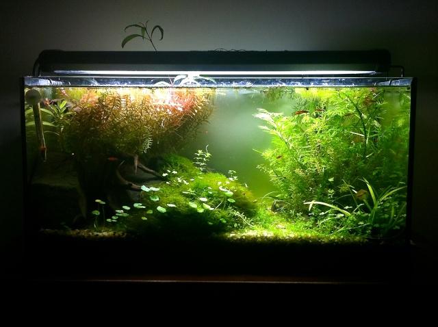 Présentation de mes aquariums - Page 5 Img_8912