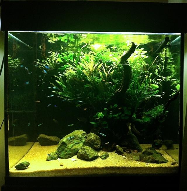 Présentation de mes aquariums - Page 5 Img_8913