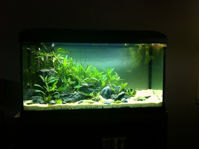 Présentation de mes aquariums - Page 5 Img_8914
