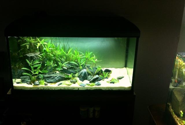 Présentation de mes aquariums - Page 5 Img_8915