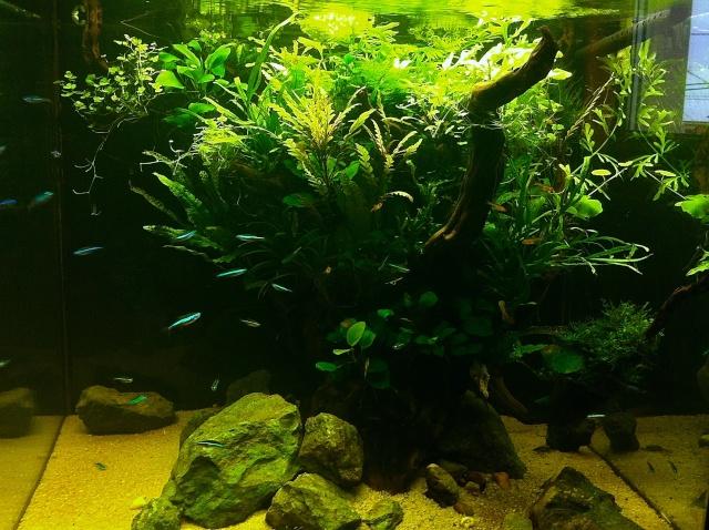 Présentation de mes aquariums - Page 5 Img_8916