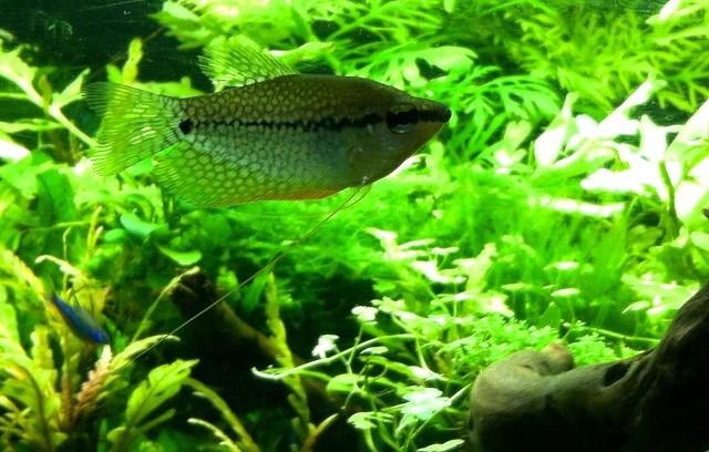 Présentation de mes aquariums - Page 6 Img_9012