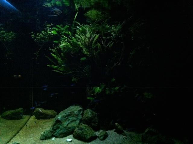 Présentation de mes aquariums - Page 6 Img_9016