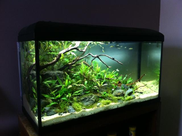 Présentation de mes aquariums - Page 10 Img_9412