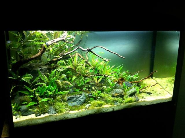 Présentation de mes aquariums - Page 10 Img_9414