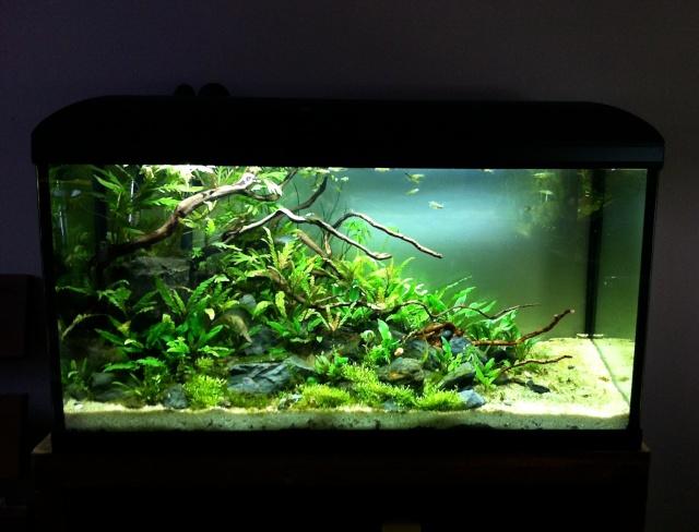 Présentation de mes aquariums - Page 10 Img_9511