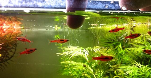 Présentation de mes aquariums - Page 10 Img_9514