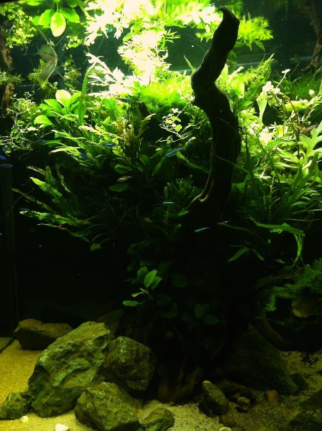 Présentation de mes aquariums - Page 10 Img_9515