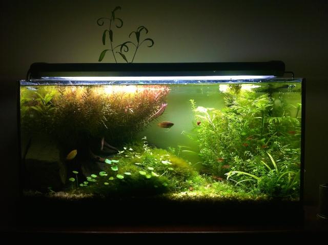 Présentation de mes aquariums - Page 10 Img_9521
