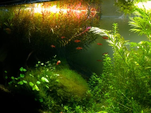 Présentation de mes aquariums - Page 10 Img_9522