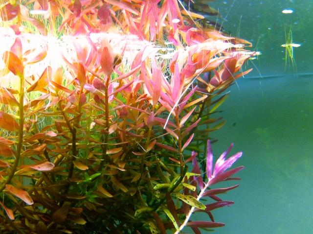 Présentation de mes aquariums - Page 10 Img_9523