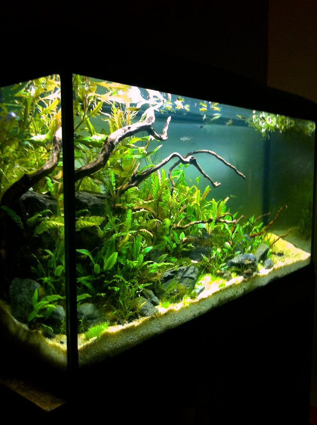 Présentation de mes aquariums - Page 10 Img_9529