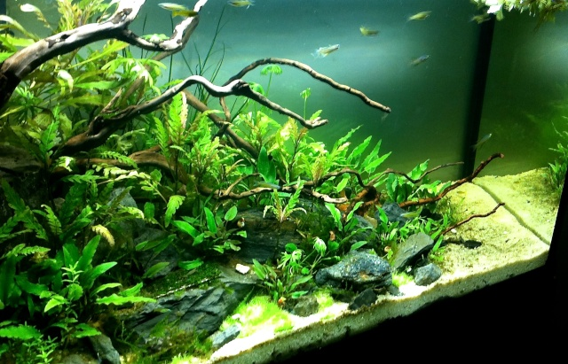 Présentation de mes aquariums - Page 10 Img_9530