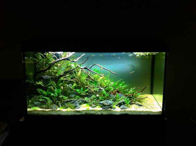 Présentation de mes aquariums Img_9531