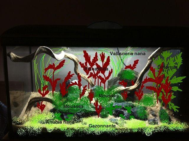 Présentation de mes aquariums - Page 3 Plan_a10