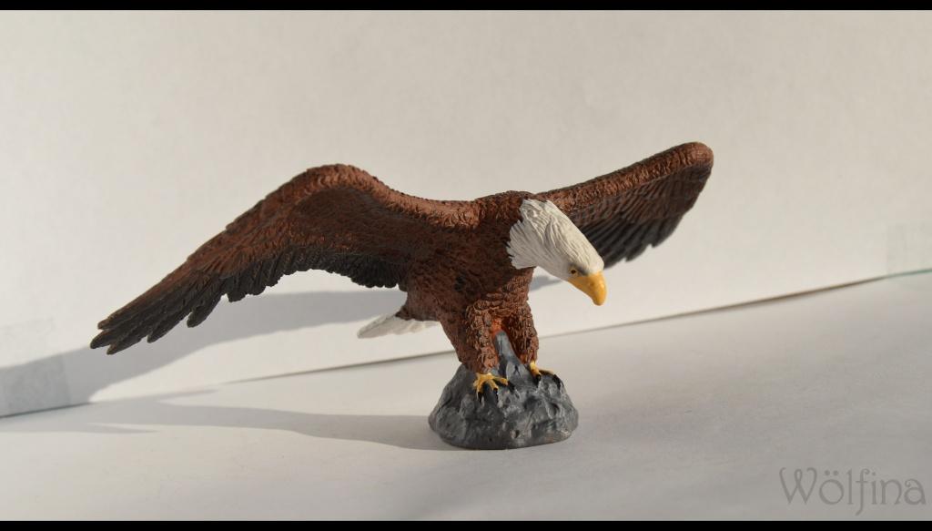 Mojö Eagle Dsc_1421