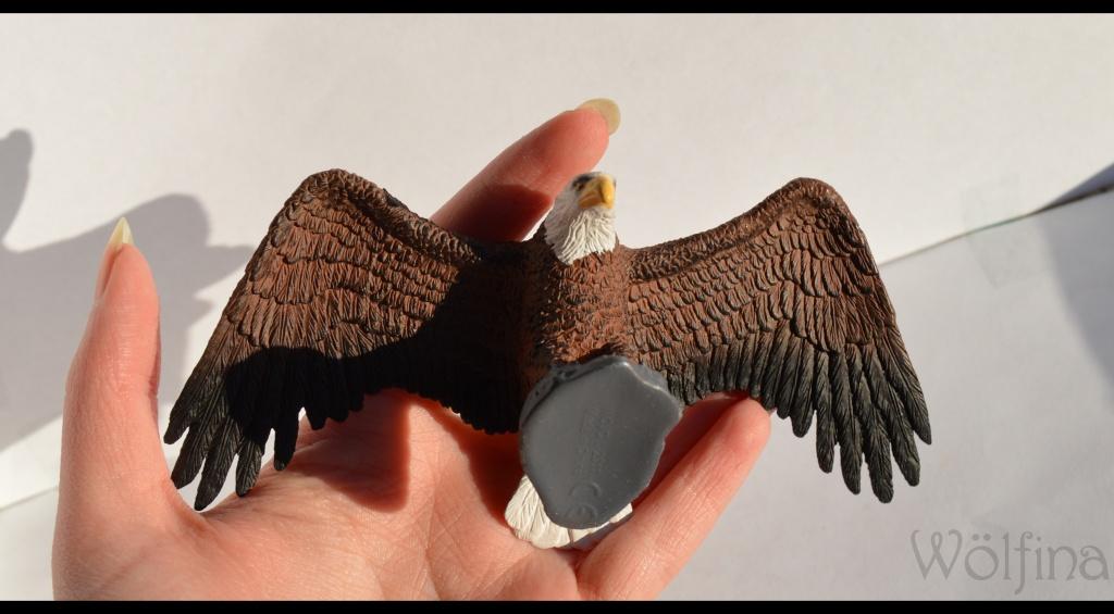 Mojö Eagle Dsc_1422