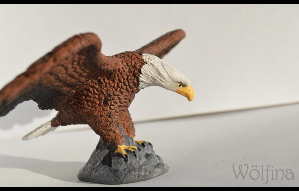 Mojö Eagle Dsc_1424