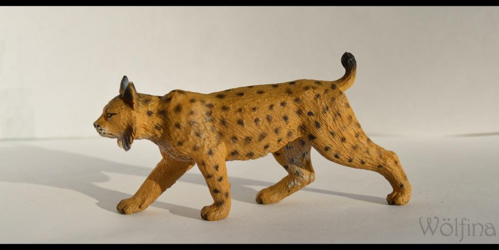 Mojö Iberian Lynx Dsc_1425