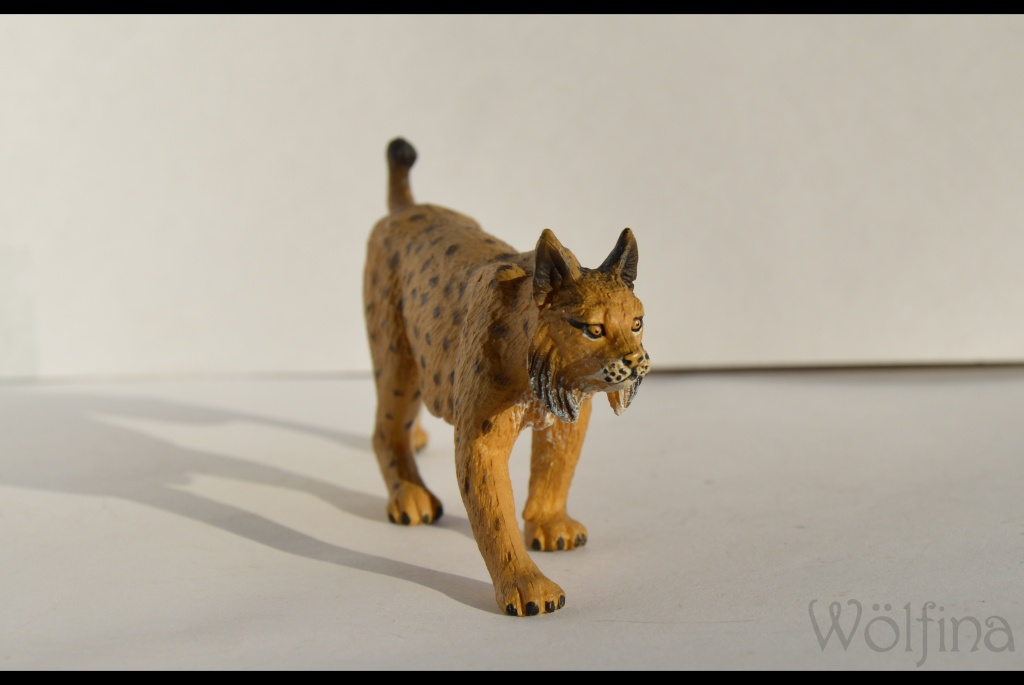 Mojö Iberian Lynx Dsc_1427