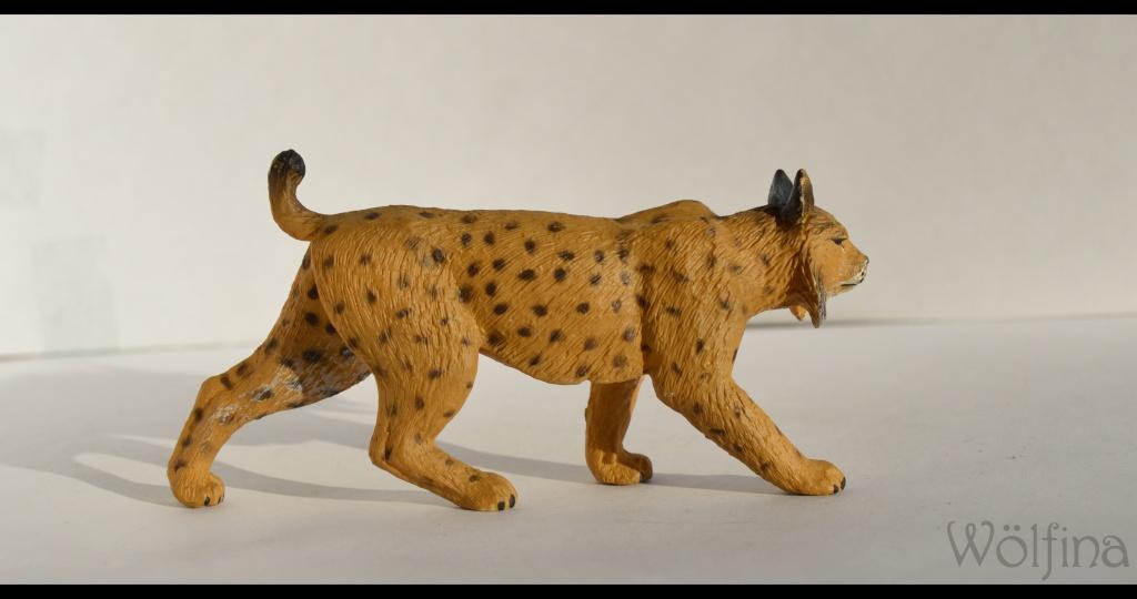 Mojö Iberian Lynx Dsc_1428