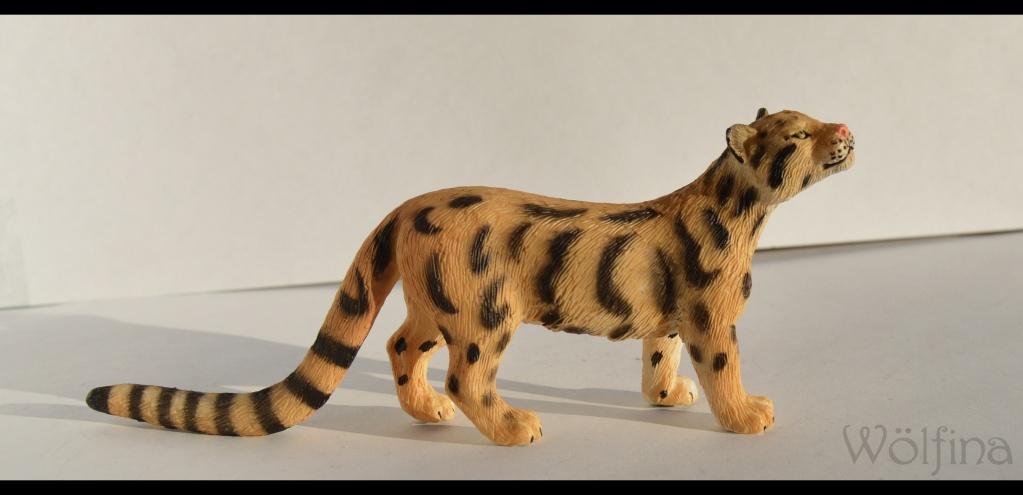 Mojö Clouded Leopard Dsc_1429