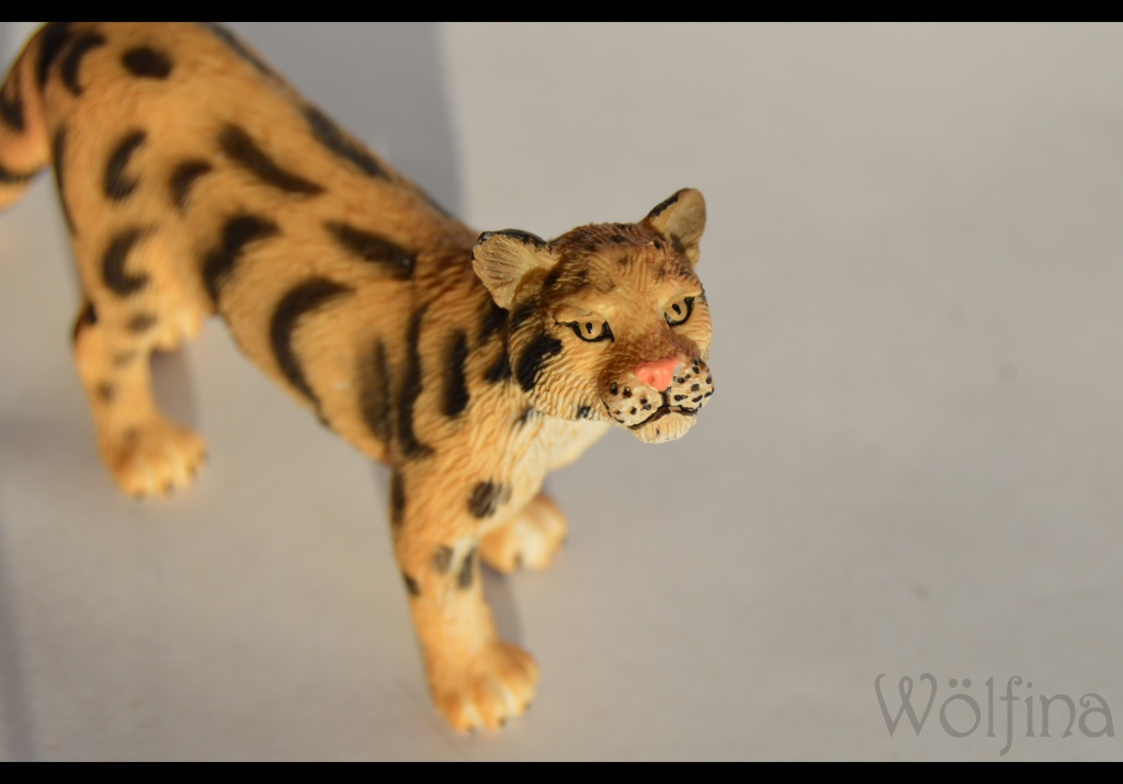 Mojö Clouded Leopard Dsc_1430