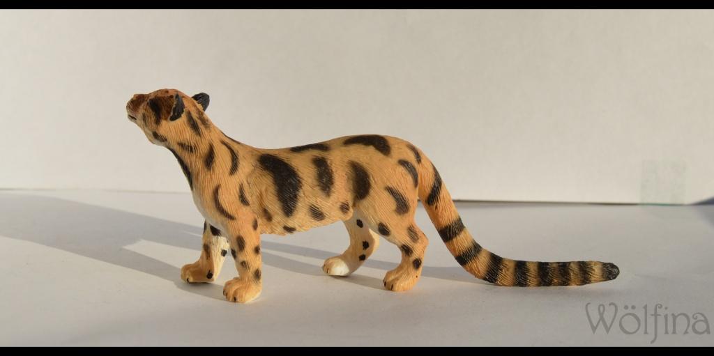 Mojö Clouded Leopard Dsc_1432