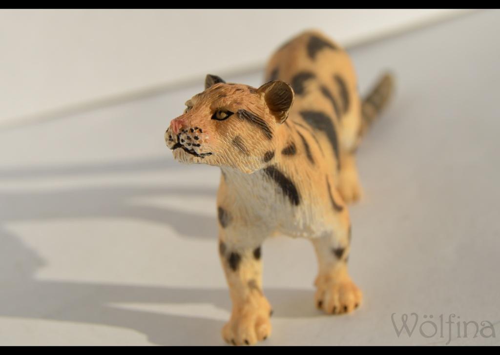 Mojö Clouded Leopard Dsc_1433