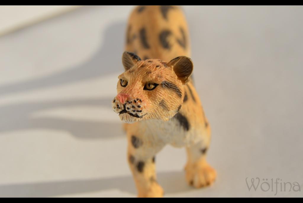 Mojö Clouded Leopard Dsc_1434