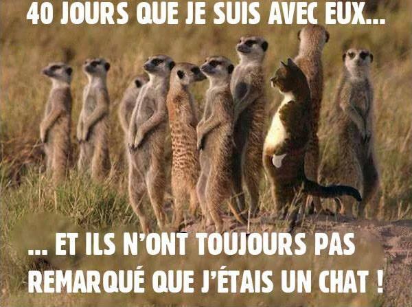 les cairns racontent leur vie à leurs copains en janvier 2015 - Page 2 Chat_m10