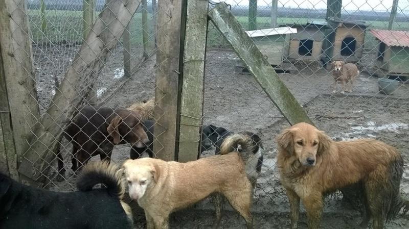 BOUNDASH II, né 2012, 25 kg (BELLA) Pris en charge Association Animals Rescue (Belgique) Bundas10